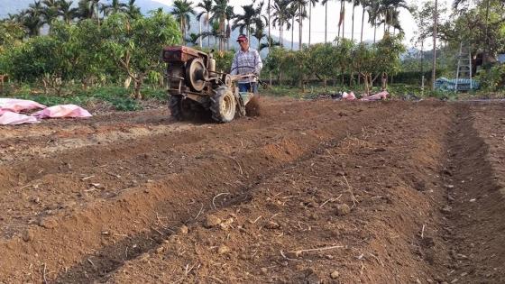 犁土鬆土備種芋頭